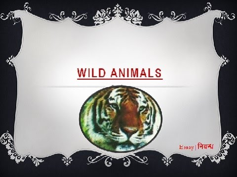 an essay on wild animals in english language  an essay on wild animals in english language