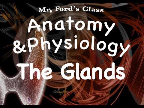 Endocrine System : Glands of the Endocrine System (12:03)