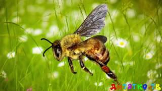 Насекомые для самых маленьких Учим насекомых Развивающие мультики для детей Животные для детей
