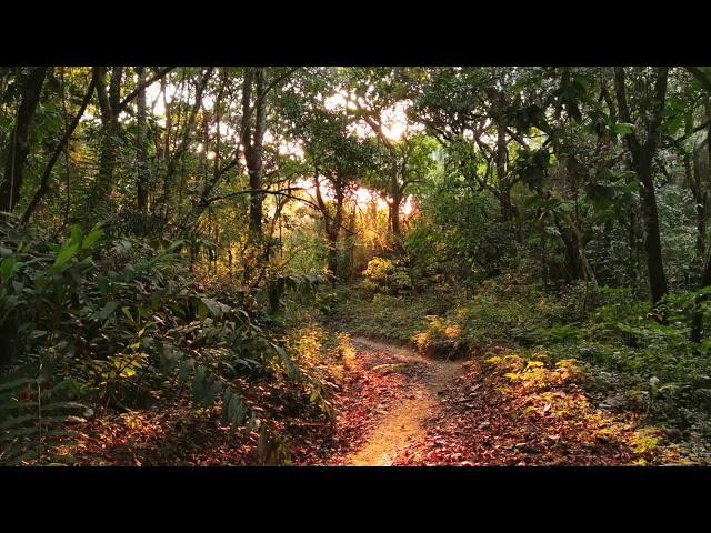 Voyage méditatif nature et chakras