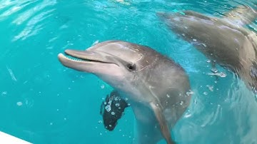 Winter and Hope Dolphin Playtime