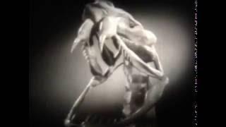 Змеи, 1962 г