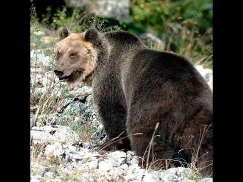 La Meravigliosa Fauna del Parco Nazionale d'Abruzzo 2016