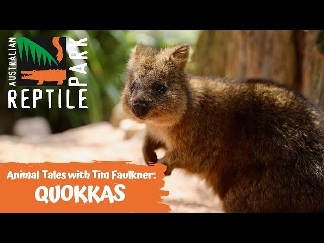 ANIMAL TALES WITH TIM FAULKNER | EPISODE 16 | QUOKKAS