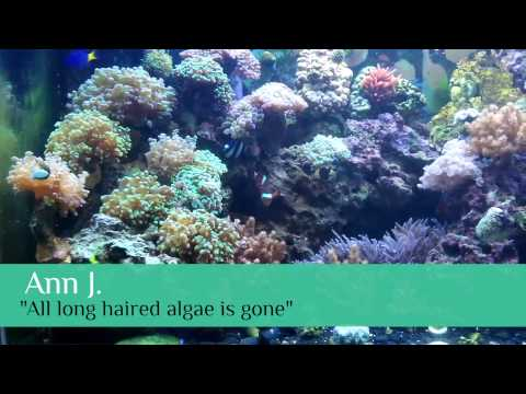 Coral Growth User Testimonials with Nualgi Aquarium