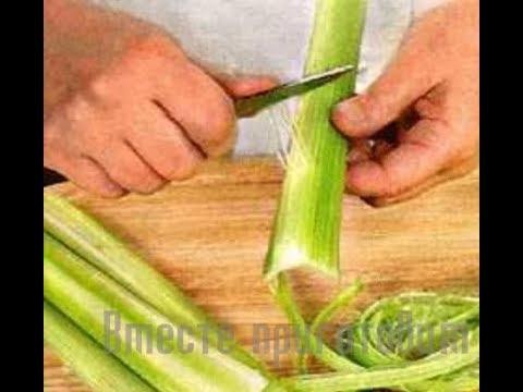 Сельдерей — лечебные свойства, применение и рецепты