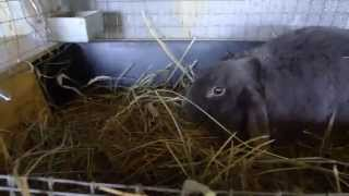 Крольчатам 3 нед.Фильм 4