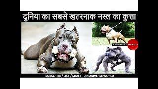 ये है दुनिया का सबसे खतरनाक नस्ल का कुत्ता - Most dangerous dog breed in the world