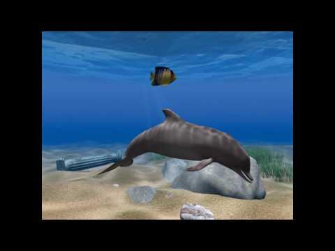 дельфинёнок.