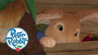 Peter Rabbit - Peter Is Caught in a Cage  Cartoons for Kids