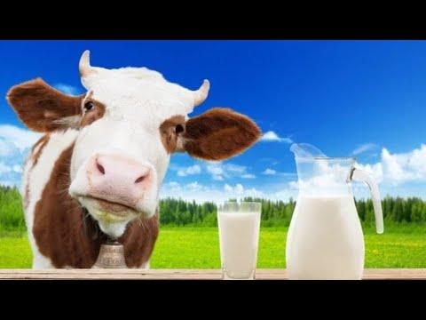 Как заработать на корове/ прибыль за год/ бизнес идея/