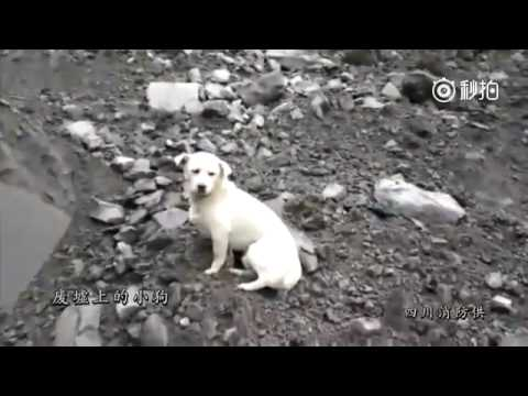 Sichuan Landslide: a dog refused to leave the area waiting on the rubble for its owner