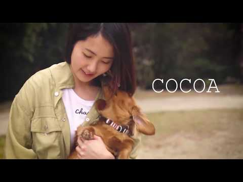 Cocoa - Pet Family