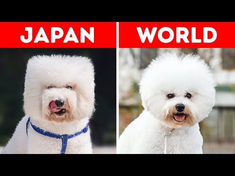 29 Things Japan Does Its Own Way