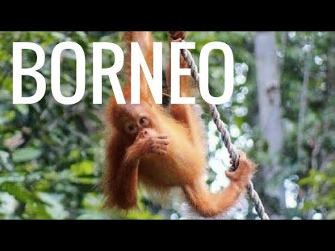 Ultimate BORNEO Backpacking & Trekking Adventure (Malaysia)