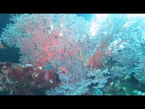 MENJANGAN SIPOLENG DIVE CLUB (canon G16 underwater)