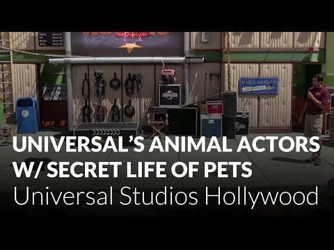 Universal's Animal Actors with The Secret Life of Pets - Universal Studios Hollywood