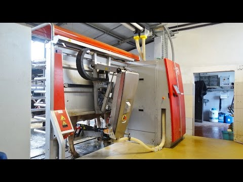 LELY ASTRONAUT A4   Robotic Milking System   Italy