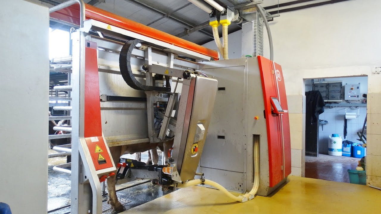 lely robotic milking system It is the intelligent aspect of the automated milking system that is new the system remembers individual animals, using its knowledge of the shape of each udder, for example, in its application of the teat-cups.