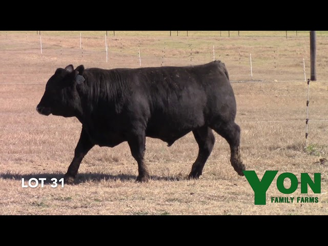 Yon Family Farms Lot 31