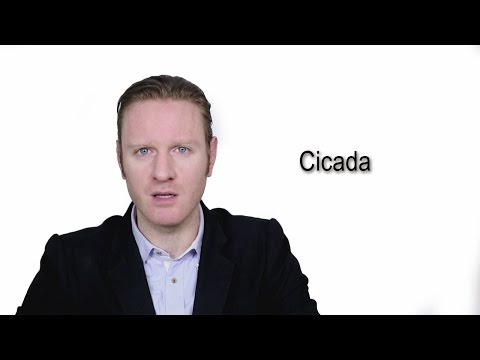 Cicada - Meaning | Pronunciation || Word Wor(l)d - Audio Video Dictionary