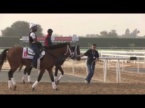 Dubai World Cup Carnival Contenders Morning Training March 22, 2017 - Part 3