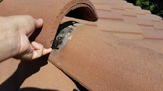 """Orange County Roof Inspection for a Concrete """"S"""" Tile Roofing - You Need to Know This!"""