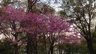 A pink Tree in color with Enchroma