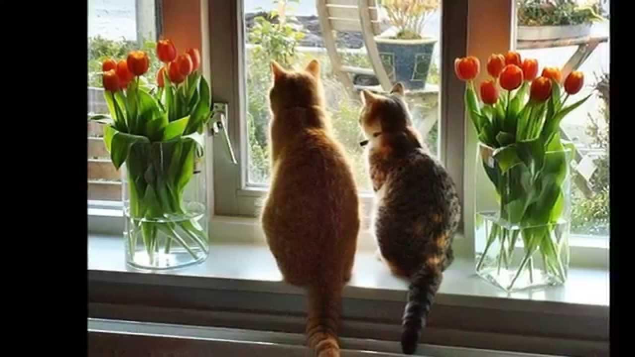 """Коты в цветах (40 фото) """" клопик.ком - сайт любителей животн."""