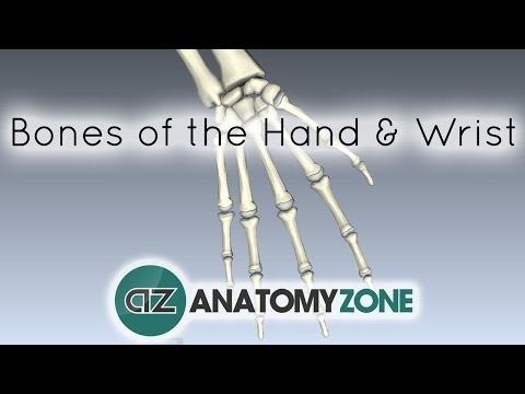 Bones of the Hand and Wrist - Anatomy Tutorial