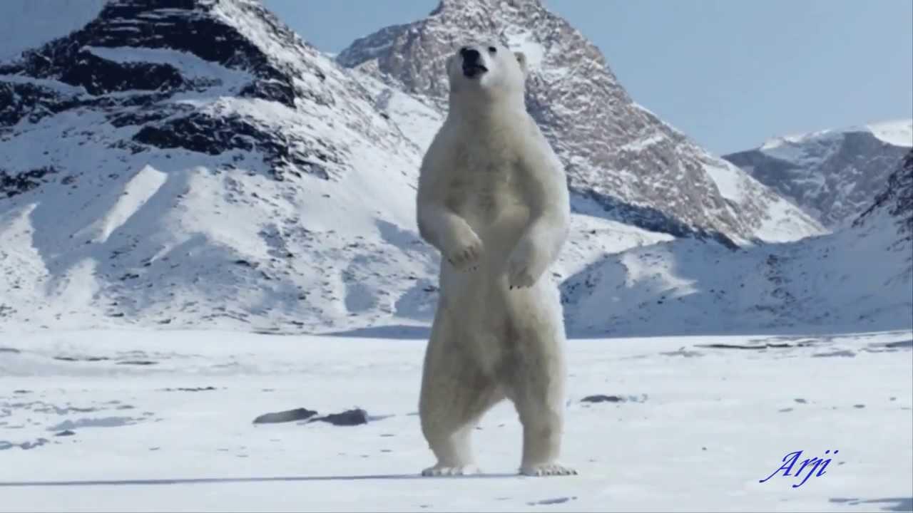 image animaux pole nord