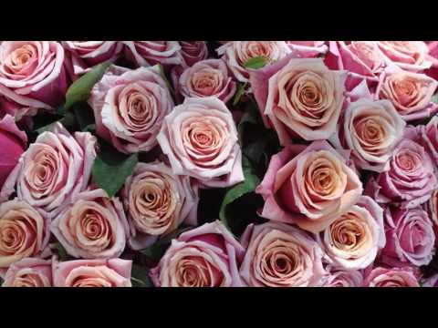 types-of-flowers-for-valentines-day