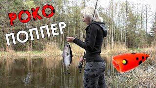 ПОКО ПОППЕР УБОЙНАЯ СНАСТЬ НА СПИННИНГ Ловля белой рыбы на спиннинг Рыбалка на попла поппер