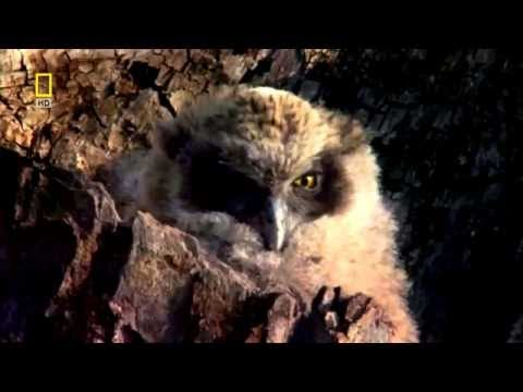 National Geographic Documentary -  North America - Wildlife Animal