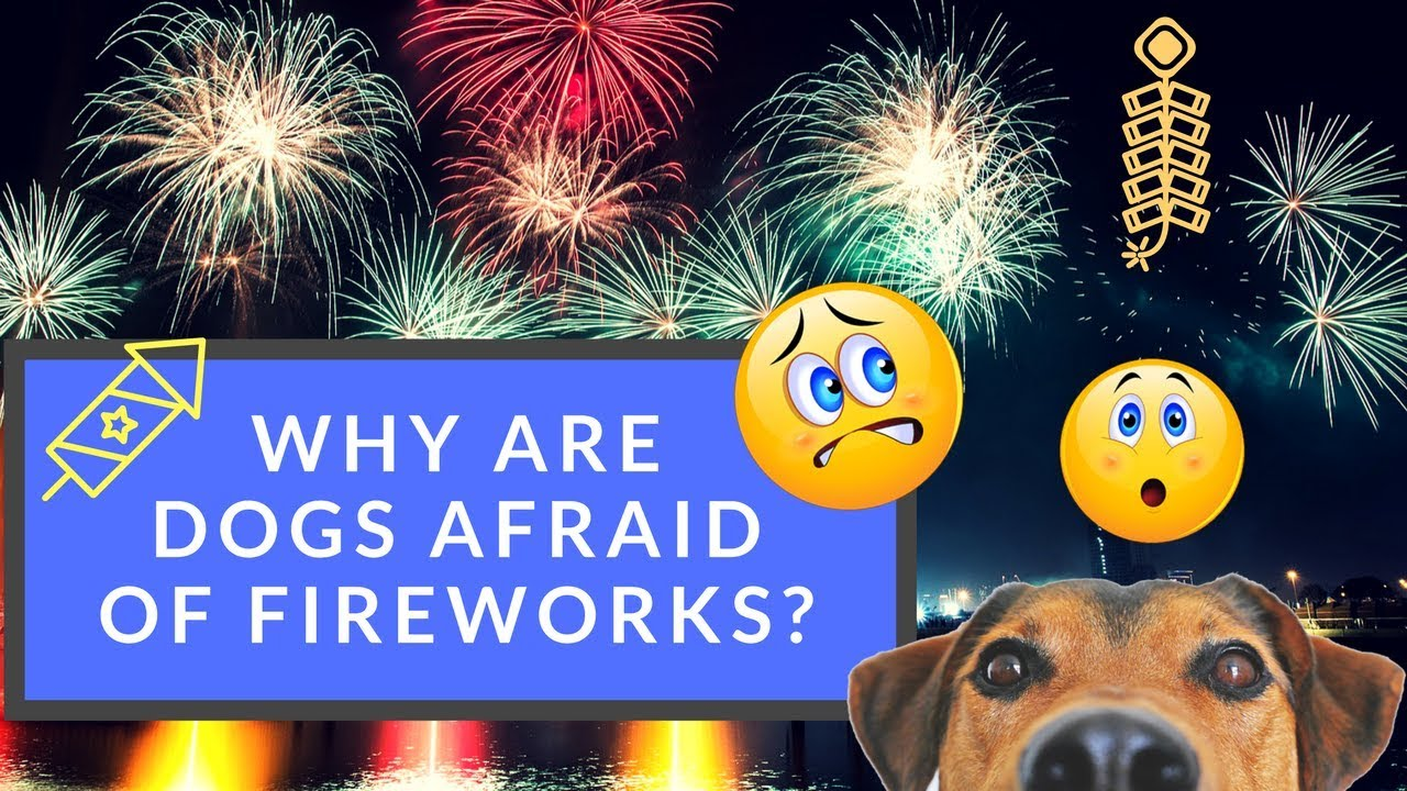 Why Are Dogs Afraid of Fireworks? Here's How You Can Help
