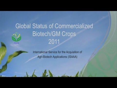 Global Status of Commercialized Biotech/GM Crops 2011