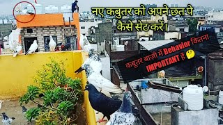 Naye Kabutar ko dusre ke Chhat pe  Baithne se  kaese Roke 🤔