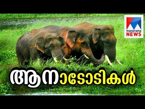 Special program on elephant journey through Resident Area at Palakkad | Manorama News