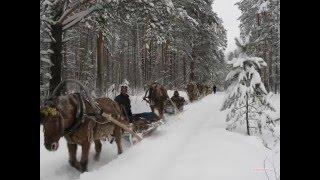 Страшные истории из жизни  На зимней дороге