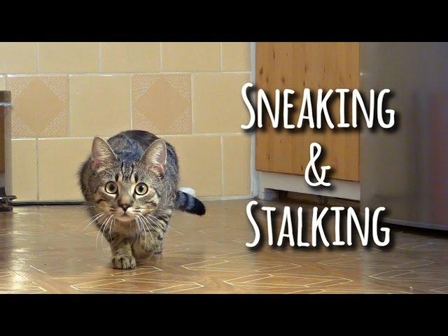 Sneaking & stalking cat