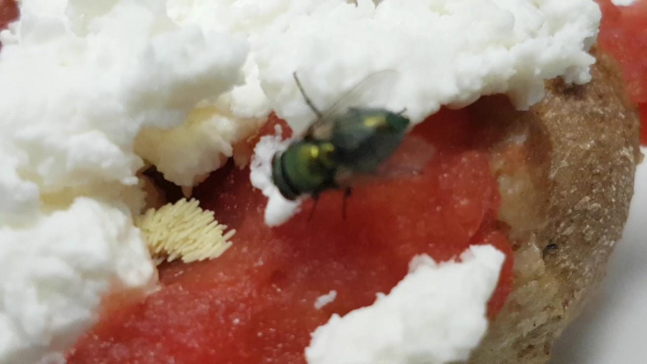Μύγα αφήνει αβγά στο φαγητό μας