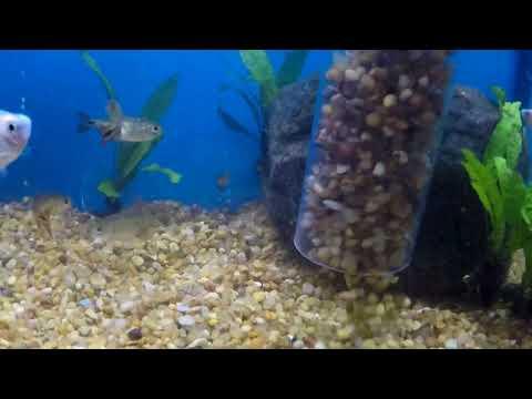 How To Gravel Vac Your Aquarium!