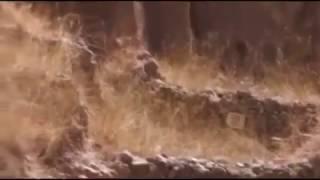 Фальшивая Троя Шлимана