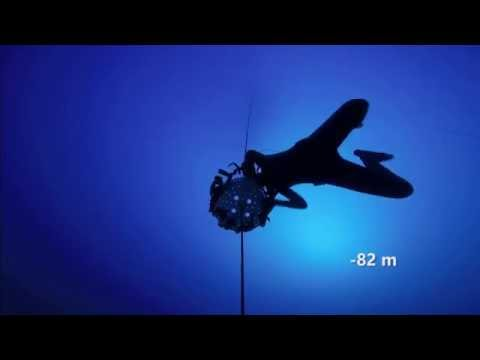 [HD] Jeanine Grasmeijer 82 meters Free Immersion w/ comments Golden dive at Aida Depth WC 2015