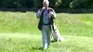 Amazing Dog Training Aid