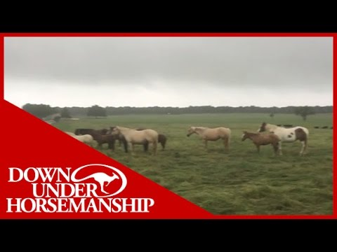 Clinton Anderson - How Horses Weather a Storm - Downunder Horsemanship