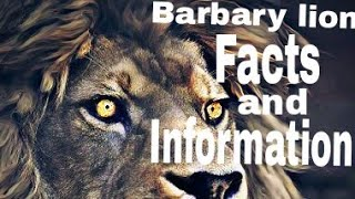 Barbary lion Facts and Information/Animal info/Facts Hut