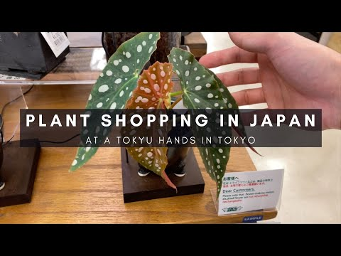 Houseplant Shopping at Tokyu Hands in Tokyo | Plants in Japan Series | Ep 72