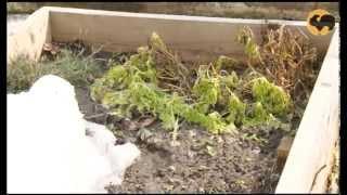 Всесезонный сад. САД день за днем №23.(Сегодня вы узнаете, как сделать ваш сад всесезонным. Мы откроем сезон и посеем в теплицу первые семена, пров..., 2013-04-30T22:05:46.000Z)