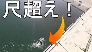 足元の巨大根魚を釣り上げろ!!!【エラの外し方】【釣行編】 thumbnail